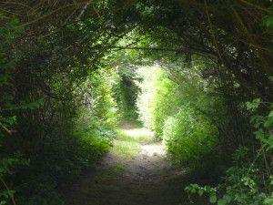 path_woods_hole_ma