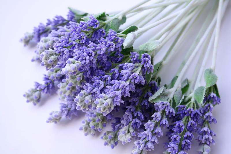 bigstockphoto_Lavender_538280
